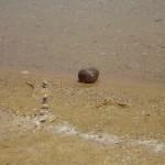 ים המלח אבן על החוף